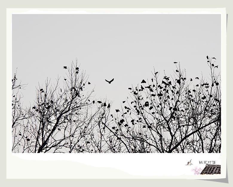 """""""凝神遐想,妙悟自然,物我两忘,离形去智"""",这的确是我在这个冬至的审美愉悦,再一次接受自然的陶冶洗礼,再一次感到大千世界的真实美好,""""心折此时无一寸"""",不禁矫情地想说:倘若春华秋实四季沧桑之后还能这么美,我情愿做一棵冬天的树,将一生之美在冬日里简笔画就."""