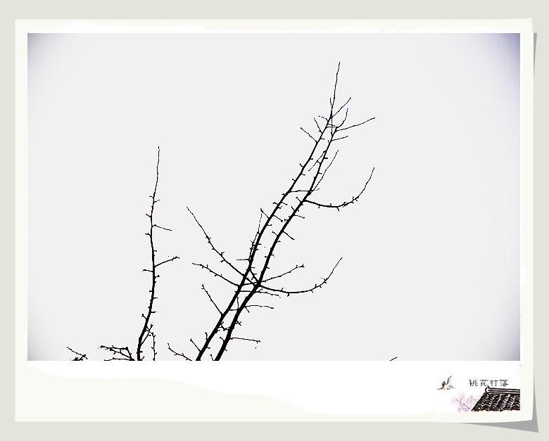 桃花树简笔画画法_画树的简笔画画法
