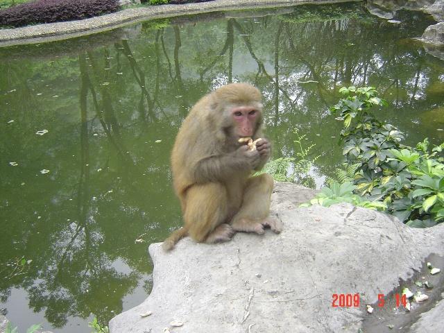 看可爱的猴子