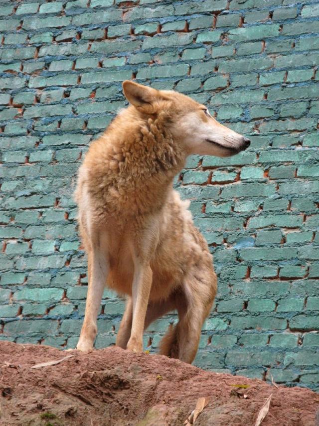 五月的尾巴,动物园