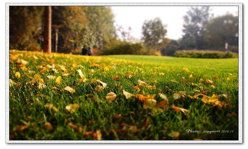 秋天照片风景图片忧伤