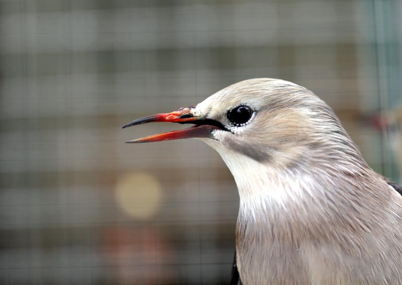 笼中小鸟的眼睛