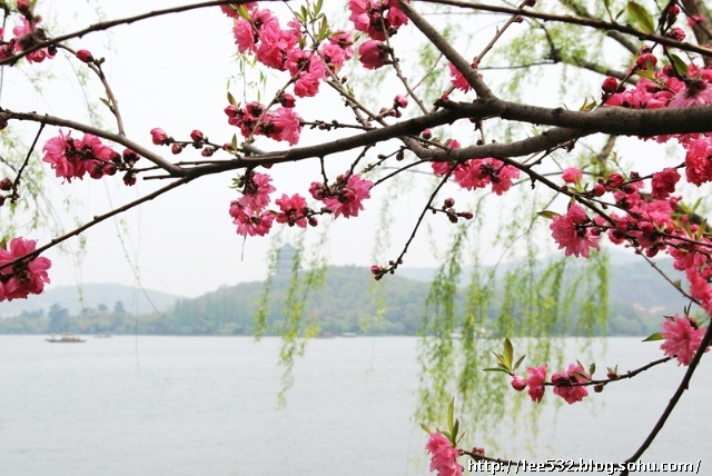 三月西湖,桃花盛开的水岸(26p)-乱码-我的搜狐
