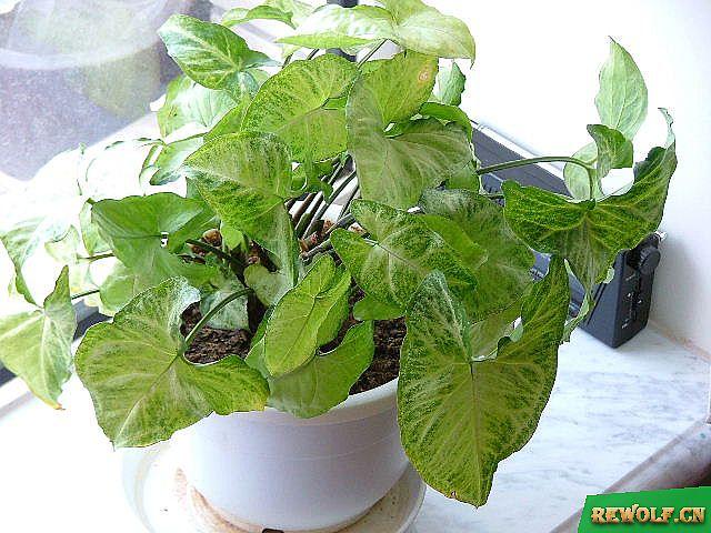 适合水养的常见植物