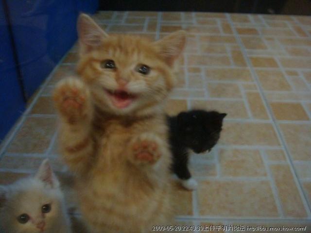 【北海关爱小动物团队】北海猫咪领养之--奶猫篇