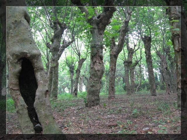[21m] 夏日嘉定--浏岛风景区