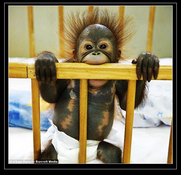 最近收集了一些可爱的动物图片,贴出来,让越来越多的人找到爱他们的
