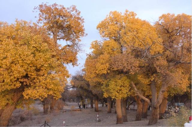 杨树林太难了图片
