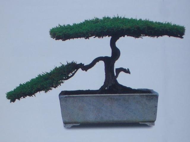 树桩盆景流派(上)