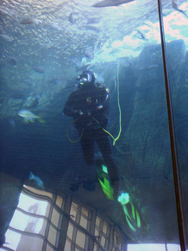壁纸 海底 海底世界 海洋馆 水族馆 630_840 竖版 竖屏 手机