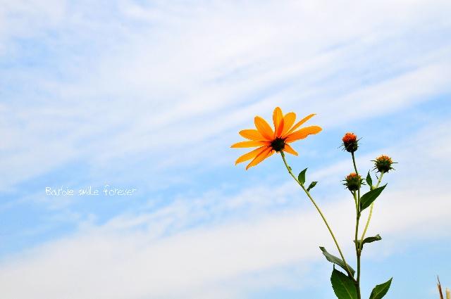 冬去春又来,寒冷褪去,喜上眉梢。闲置的空间突然从脑中记起,于是,我选择归来。 新的一年了,除了问候,便是祝福。昨天日本8.8级的强震和海啸让我的心情非常沉重,虽然没有去过日本,但一直心存幻想,而如今美丽的庄园夷为平地,心痛…… 美丽的春天来了,希望我的朋友们一切安好!为你们祝福!