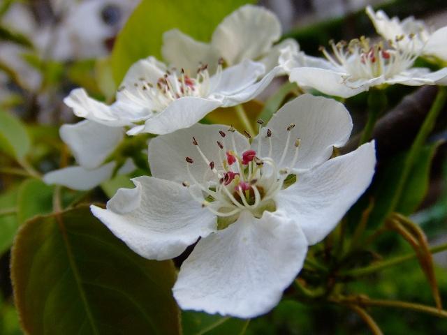 春天的花儿,开得纷繁